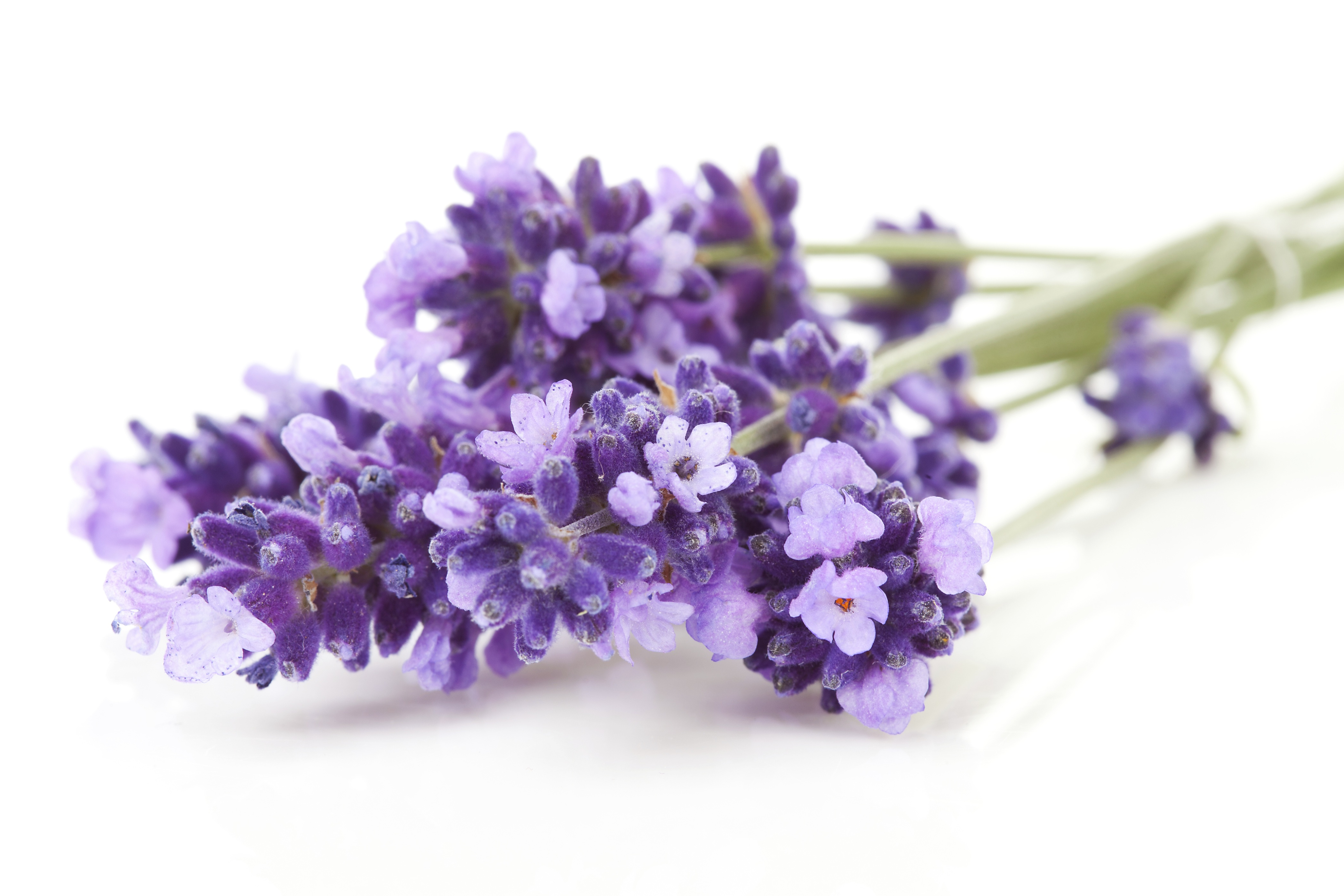 Lavender Oil Chemical Properties